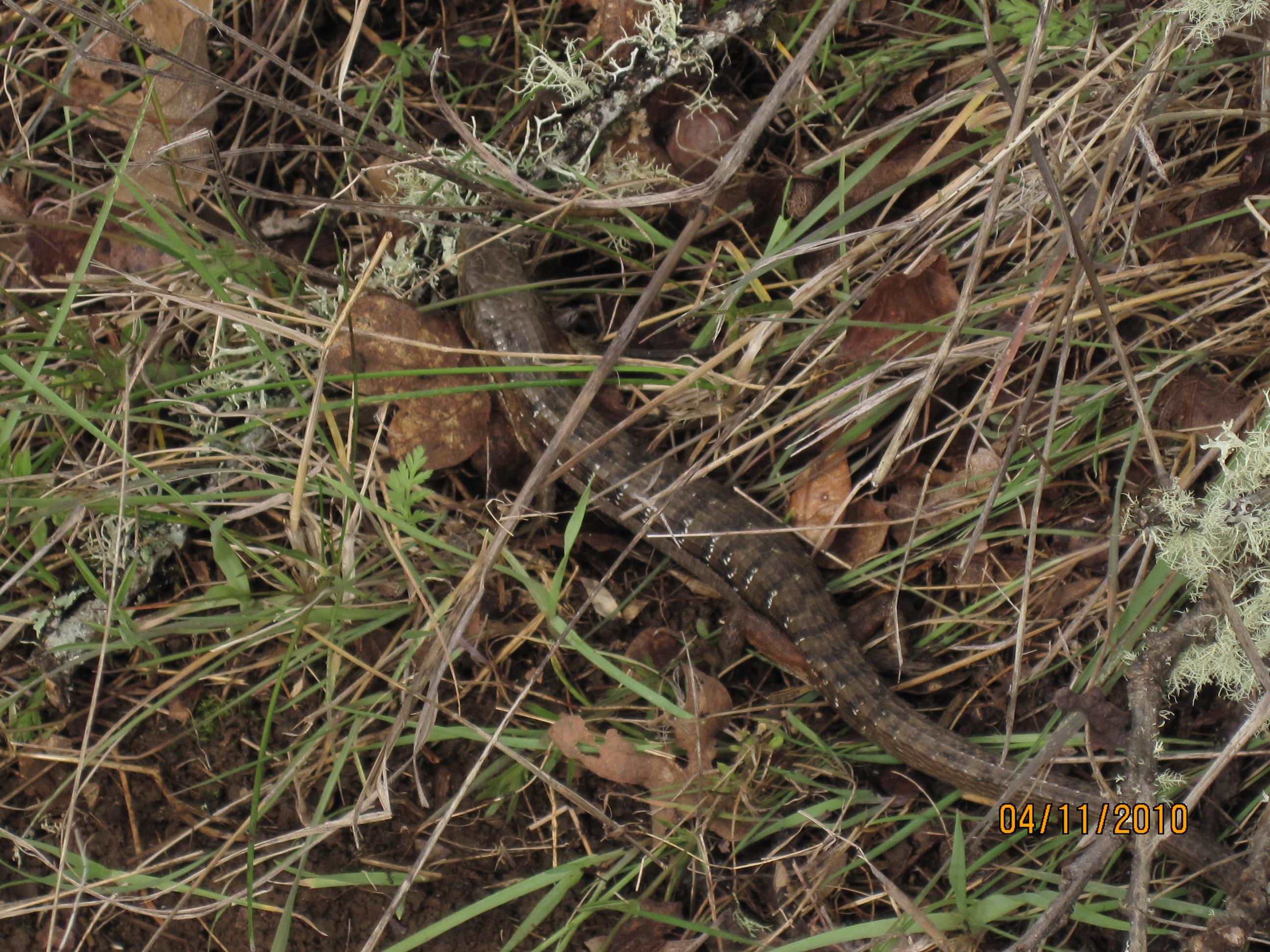 truffle spider lizard gopher valley journal