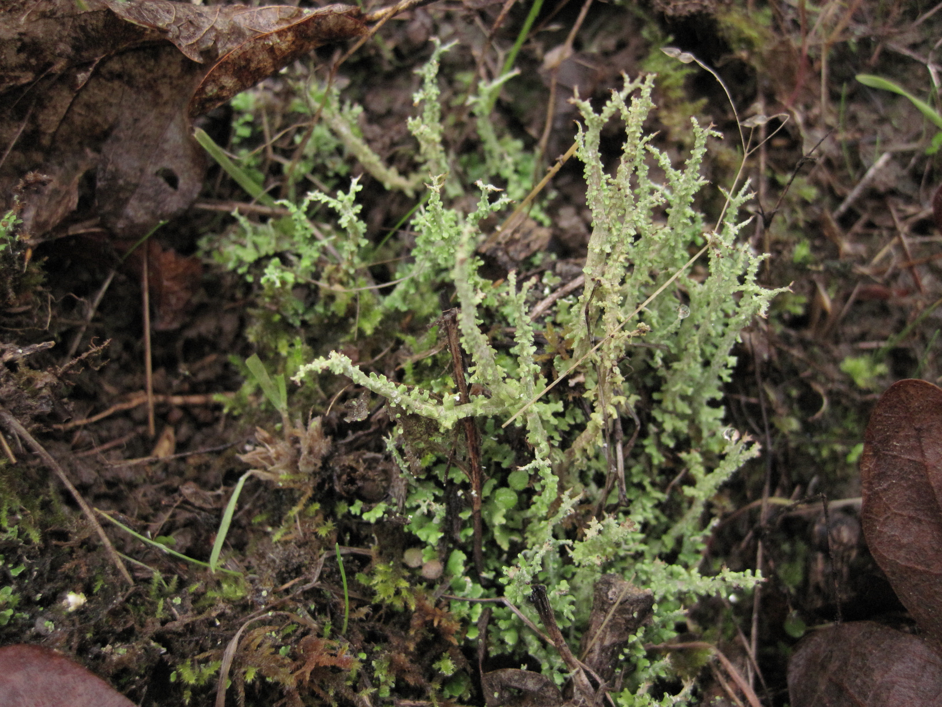 Lichens gopher valley journal for Another name for soil