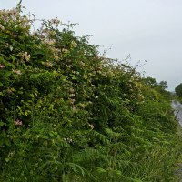 Everybody Needs A Hedgerow