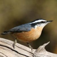 On Birding