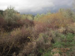 Winter twigs and lichens color the winter landscape - surprisingly vivid