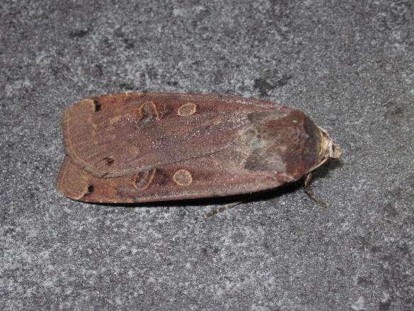 moth 3. nat.light_2