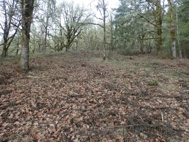 The woodland at winter rest after treatment. Many orchids slumber below!
